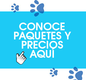 paquetes happy dogs monterrey